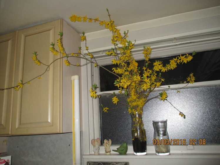 Forsythia welcome from Lynn
