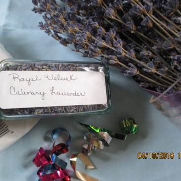 Confectionary Lavender